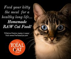 50 best homemade raw cat food how to make images on pinterest give your kitty a meal truly designed for cats a species appropriate diet for all cats for a long and healthy life raw cat food make your own homemade forumfinder Choice Image