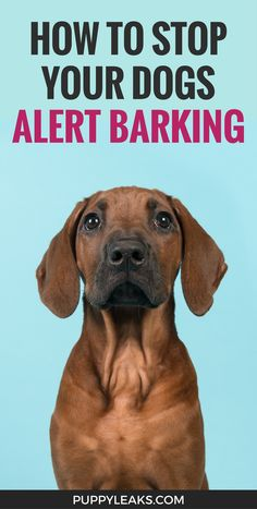 How to Stop Your Dogs Alert Barking