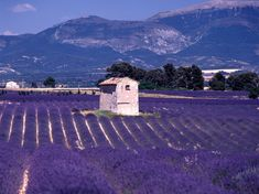 From the Fields of Provence to Your Home: 4 Amazing Skin Benefits of Lavender via @CNTraveler