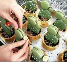 Have any green macarons on hand? Try out these adorable cacti macaron tarts by… Just Desserts, Dessert Recipes, Green Desserts, Disney Desserts, Macaroon Recipes, Drink Recipes, Dinner Recipes, Let Them Eat Cake, Cupcake Cakes