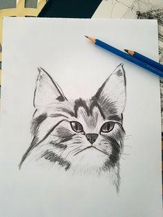 Drawing#cat#