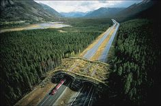 Wildlife crossing, Banff National Park, Alberta, Canada 'Animal bridges' or Wildlife crossings are built in order to prevent animals from being killed by cars in the places where highways cut through the wildlife habitat and separate it.