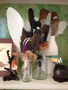 Feathers collected from around my garden. I live in a rural area so there are plenty of feathers to be found.