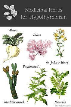 Plantele de hipotiroidie