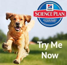 Online store for pet lovers, providing Hills Science plan Dog food