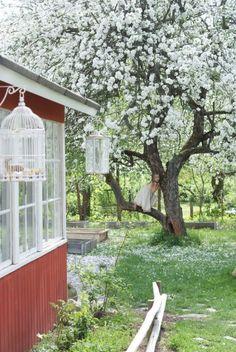 Omenasta - Ruususuu ja Huvikumpu - Kodin Kuvalehti