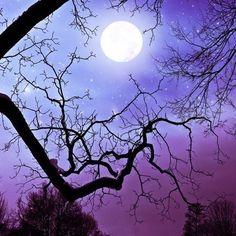 Halloween decoration, purple photography, primitive, spooky, bare tree banches, jewel tone, spooky full moon, 8x8 print. $25.00, via Etsy.