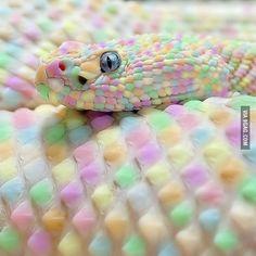 i know it's just photoshopped leucistic rattlesnake, but it looks gorgeous