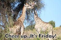 Namibia Safari and Lodges - Gondwana Collection River Camp, Main Attraction, Round Trip, Wild Horses, Lodges, Giraffe, Safari, National Parks, Wildlife