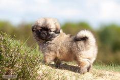 Please visit our website for Teddy Bear, Shoulder Bag, Dogs, Profile, Animals, Website, Future, User Profile, Animais