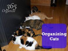 Organizing Cats | Organize 365
