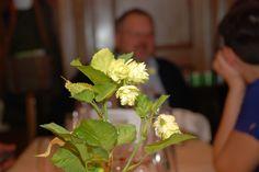 44. Innviertler Bierologenstammtisch Thema: Sommerbiere Plants, Pictures, Beer, Plant, Planets