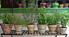 Como fazer uma horta de temperos | Decorando Casas Plantar, Herb Garden, Greenery, Planter Pots, Gardening, Decoupage, Iron, Sweet, Design