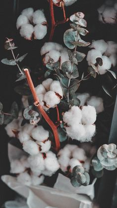 - It looked cool. Wanted it. Plant Wallpaper, Flower Phone Wallpaper, Nature Wallpaper, Wallpaper Backgrounds, Beauty Iphone Wallpaper, Plant Aesthetic, Nature Aesthetic, Flower Aesthetic, Aesthetic Pastel Wallpaper