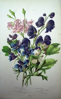 1899 Exquisite Garden Flowers Herb Vegetable Common