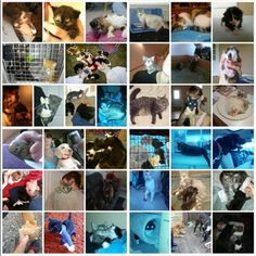Rescue Losing Everything.... Help Us Save Them! - This very well could be the end of the rescue... Animals & Rescuer Losing Home. Feral Friends of Union County needs your help! Please if you can, donate and help the ferals and Nikkie!