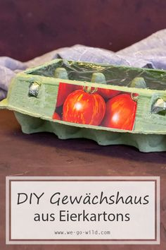 Pull tomatoes yourself in the egg box greenhouse - Gärtnern Ideen 2020 Hydrangea Care, Hydrangea Flower, Natural Farming, Small Vegetable Gardens, Painted Sticks, Organic Fertilizer, Tomato Plants, Growing Plants, Recycled Materials