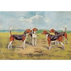 Buyenlarge Orthodox Foxhounds by T. Ivester Llyod Painting Print Size: