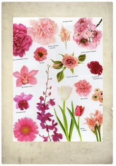 pink flowers- vintage, garden, feminine flowers/ bouquets/ wedding arrangements