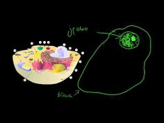 Budowa komórki - YouTube