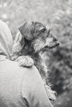 #photographie #photography #animal #dog #chien #teckel #nature #details #vintage #manon #debeurme #photographe #photographer Manon, Dogs, Nature, Photos, Vintage, Dachshund Dog, Photography, Animaux, Naturaleza