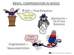 Nursing School: Medical Surgical Nursing Mnemonics Renal Compensation in Shock Nursing Programs, Nursing Tips, Lpn Programs, Nursing Career, Med Surg Nursing, Nursing Information, Rn School, School Life, School Hacks