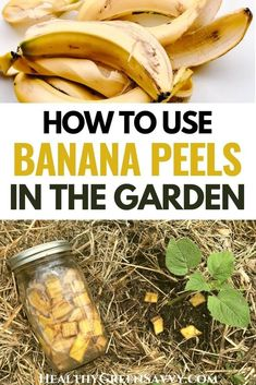 Have you wondered about all the hype over banana peel fertilizer? Here's what to know about best practices for using banana peels in the garden. #garden #bananapeelfertilizer #gardeningtips Growing Vegetables, Fruits And Veggies, Home Remedies For Mosquito, Homemade Banana Ice Cream, Banana Peels, Acid Loving Plants, Dried Bananas, Fertilizer For Plants, Delicious Fruit