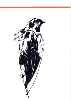 Roxanne Goffin, taxidermy, dead bird, pen drawing