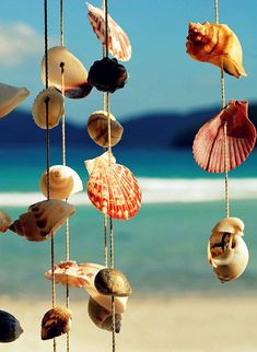 Collect shells and hang them on the porch, the wind will blow them, close your eyes and listen to the sound....