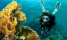 Groupon - $ 199 for a PADI Open Water Diver Certification Course and Scooter Dive at Beach Cities Scuba ($675 Value)   in Multiple Locations. Groupon deal price: $199