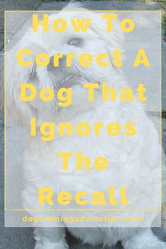 Hand Signals, Behavior Modification, Dog Biscuits, Dog Wear, Dog Behavior, Dog Training Tips, Dog Owners, What You Can Do, Dogs
