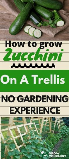 To learn how to grow zucchini on a trellis, I had to try it myself. Here is a report on that matter. It wasn't easy, but it was fun. #GardeningTips