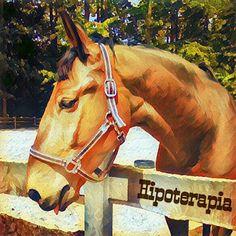 Niebieski Segregator - Hipoterapia część druga Horses, Animals, Animales, Animaux, Animais, Horse, Words, Animal