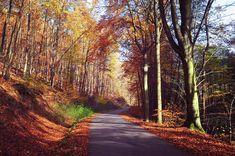 Way Through The Autumn by Jenny Rainbow