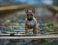 little dog in a BIG world