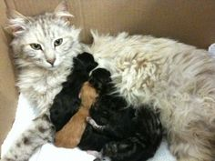 Momma Mia! 7 Important Tips When Caring for Momma Cats and Kittens