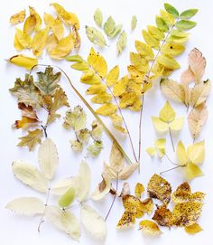 autumn foliage: more green, but these types of light yellows pinks and browns (watercolor colors)