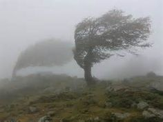 Wind Blowing in the Trees - Bing images