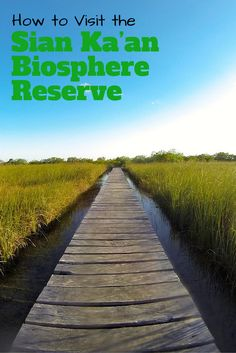The Sian Ka'an Biosphere Reserve is a UNESCO World Heritage site that is just south of Tulum, Mexico. Avoid the pricey package tours and check out how to visit on your own!