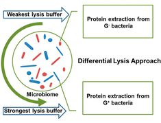 ASAP Differential Lysis Approach Enables Selective Extraction of Taxon-Specific Proteins for Gut Metaproteomics Natural Resources, Enabling, Protein, Chart