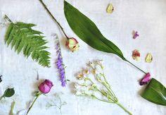 Flower flatlay by CoffeeandCinnamon on @creativemarket