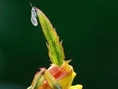 Macro insect plant garden