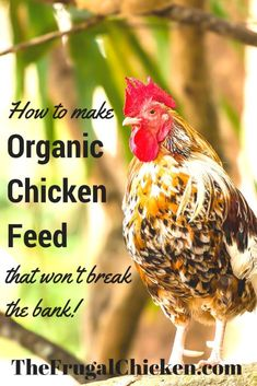 Want to give organic chicken feed to your flock but cant afford the high prices Making your own is a snap This article has a recipe that shows you how and exactly what to. Raising Backyard Chickens, Keeping Chickens, Pet Chickens, What To Feed Chickens, Urban Chickens, Portable Chicken Coop, Diy Chicken Coop, Chicken Ideas, Chicken Feeders