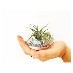 White sand globes have been the most popular recently! They really show off the silvery-green of the chosen air plant inside and can look really effective without shells and stones - just sand and plant  Try it both ways and see which you prefer!