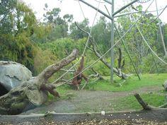 SD Zoo photos