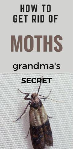 22 best getting rid of moths images getting rid of moths natural rh pinterest com