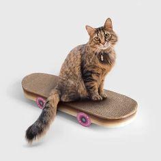Kitten Toys, Cat Toys, Cat Skateboard, Cat Playhouse, Cardboard Cat Scratcher, Cat Activity, Matou, Cool Skateboards, Quirky Gifts