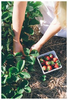 "He smiled and took your hand, leading you down the stairs and out to the fancy little car you two were renting while staying there. ""The Gallery was last night, which means today is our day of fun."" He grins.  - A short time later he leads you into a strawberry patch after purchasing a basket for you two to fill. ""We're picking strawberries for the desert I'm making you tonight."" He smirks even more after giving you a soft kiss, placing a sun hat on your head to protect your pretty red hair"