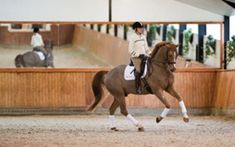9 Tips for Riding a Winning Dressage Test | Dressage Today