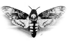 Deathhead Hawk-Moth | Charcoal on Paper |50x35cm Original and prints available on www.christianklute.com #artwork #monochrome #drawing #charcoal #moth #art #realism #workinprogress #bnw_society #bw_lover #monoart #noir #artcollector #artcollection #blackandwhite #hawkmoth #acherontiaatropos #hannibal #deathhead #silenceofthelambs #artstudio #instaart #dark #grey #black #goth #gothic #blackisbeautiful #bnw #darkart
